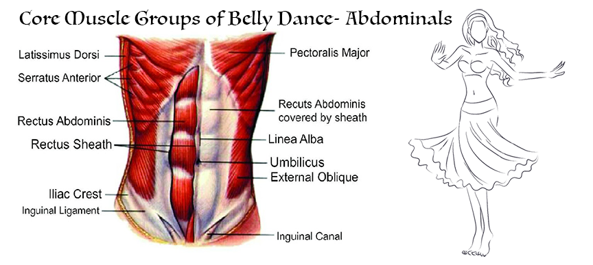 Core Muscle Groups of Belly Dance- Abdominals – Temple Bellyfusion Dance